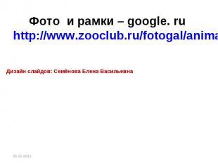 Фото и рамки – google. ru http://www.zooclub.ru/fotogal/anima/birds13.shtml Диза