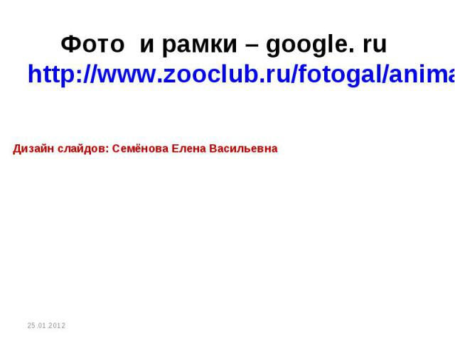 Фото и рамки – google. ru http://www.zooclub.ru/fotogal/anima/birds13.shtml Дизайн слайдов: Семёнова Елена Васильевна