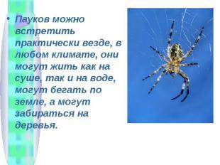 Пауков можно встретить практически везде, в любом климате, они могут жить как на