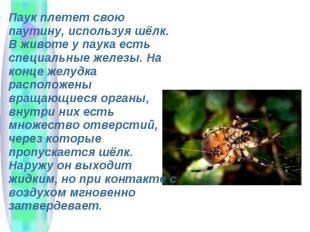 Паук плетет свою паутину, используя шёлк. В животе у паука есть специальные желе