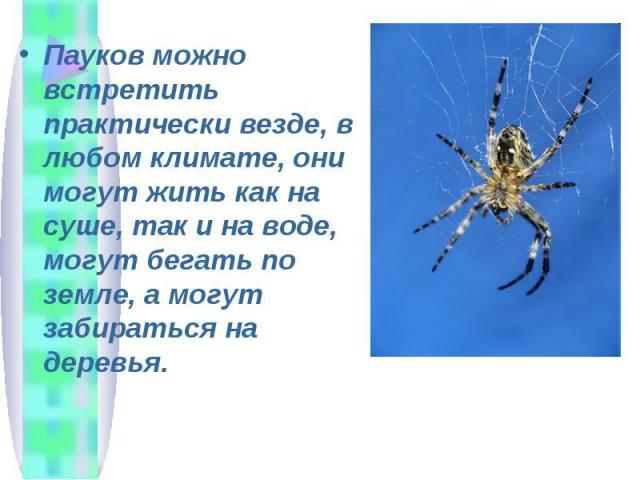 Пауков можно встретить практически везде, в любом климате, они могут жить как на суше, так и на воде, могут бегать по земле, а могут забираться на деревья.