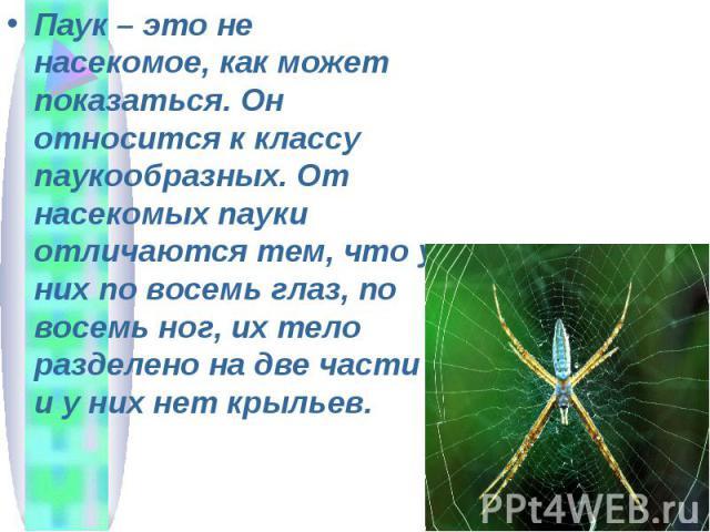 Паук – это не насекомое, как может показаться. Он относится к классу паукообразных. От насекомых пауки отличаются тем, что у них по восемь глаз, по восемь ног, их тело разделено на две части и у них нет крыльев.