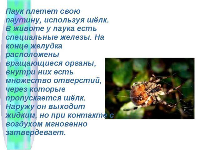 Паук плетет свою паутину, используя шёлк. В животе у паука есть специальные железы. На конце желудка расположены вращающиеся органы, внутри них есть множество отверстий, через которые пропускается шёлк. Наружу он выходит жидким, но при контакте с во…