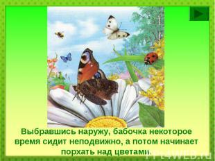 Выбравшись наружу, бабочка некоторое время сидит неподвижно, а потом начинает по