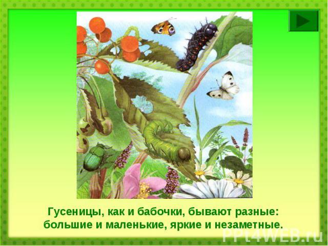 Гусеницы, как и бабочки, бывают разные: большие и маленькие, яркие и незаметные.