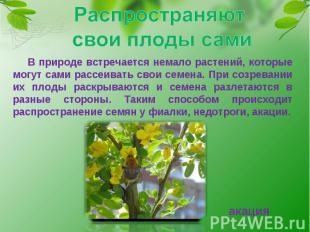 Распространяют свои плоды сами В природе встречается немало растений, которые мо