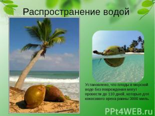 Распространение водой Установлено, что плоды в морской воде без повреждения могу