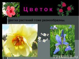 Ц в е т о кЦветки растений тоже разнообразны.