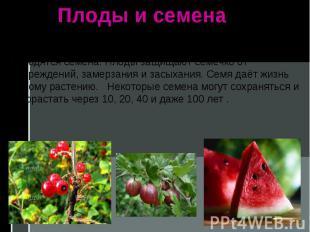 Плоды и семена Плоды разных растений непохожи между собой, но они всегда образую