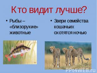 Кто видит лучше?Рыбы – «близорукие» животные Звери семейства кошачьих охотятся н