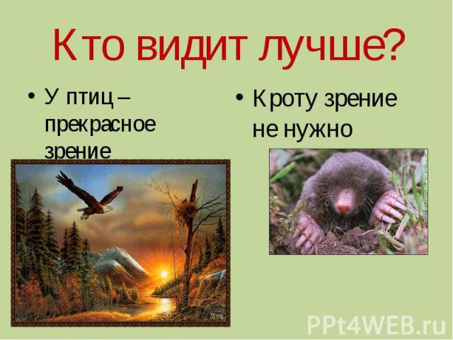 Кто видит лучше?У птиц – прекрасное зрение Кроту зрение не нужно