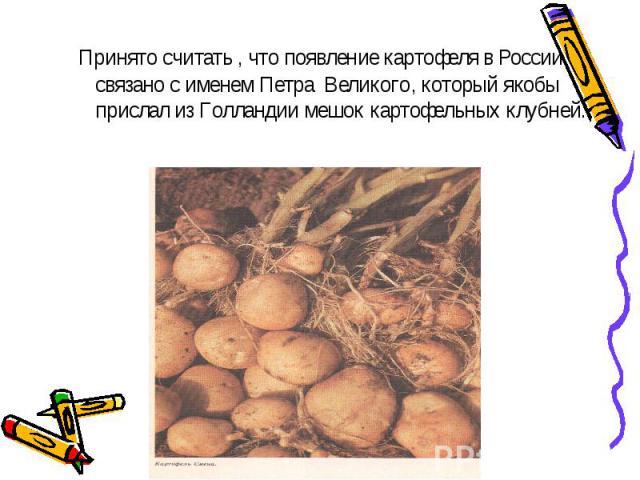 Принято считать , что появление картофеля в России связано с именем Петра Великого, который якобы прислал из Голландии мешок картофельных клубней.