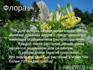 Флора Для флоры заповедника характерно наличие древних видов и представителей, и