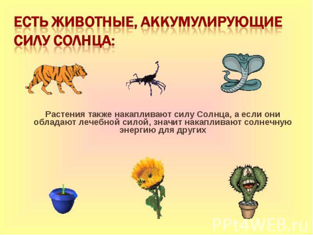 Есть животные, аккумулирующие силу Солнца: Растения также накапливают силу Солнца, а если они обладают лечебной силой, значит накапливают солнечную энергию для других