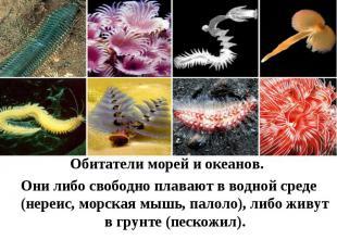 Обитатели морей и океанов. Они либо свободно плавают в водной среде (нереис, мор