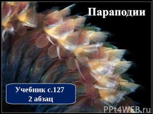 Параподии Учебник с.127 2 абзац