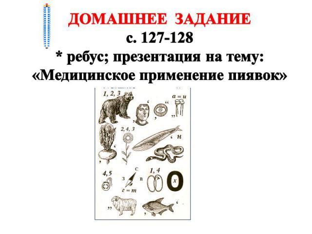 ДОМАШНЕЕ ЗАДАНИЕ с. 127-128 * ребус; презентация на тему: «Медицинское применение пиявок»