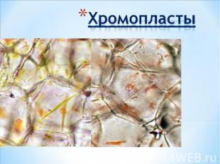 Хромопласты