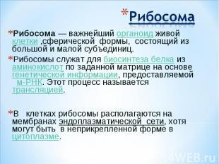 РибосомаРибосома— важнейший органоид живой клетки ,сферической формы, состоящий