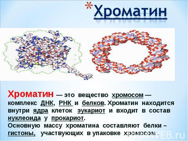 ХроматинХроматин— это вещество хромосом— комплекс ДНК, РНК и белков. Хроматин находится внутри ядра клеток эукариот и входит в состав нуклеоида у прокариот. Основную массу хроматина составляют белки – гистоны, участвующих в упаковке хромосом .