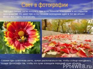Свет в фотографии Хорошие снимки легче получить при естественном освещении и на