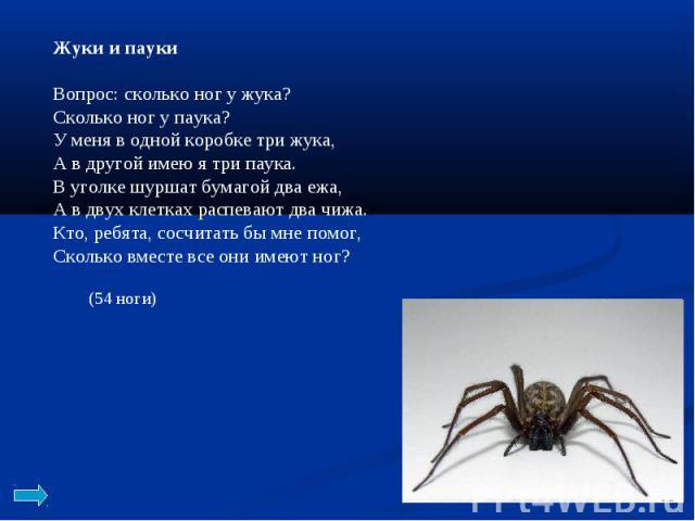 Жуки и пауки Вопрос: сколько ног у жука? Сколько ног у паука? У меня в одной коробке три жука, А в другой имею я три паука. В уголке шуршат бумагой два ежа, А в двух клетках распевают два чижа. Кто, ребята, сосчитать бы мне помог, Сколько вместе все…