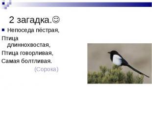 2 загадка. Непоседа пёстрая, Птица длиннохвостая, Птица говорливая, Самая болтли