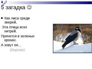 5 загадка Как лиса среди зверей, Эта птица всех хитрей. Прячется в зеленых крона