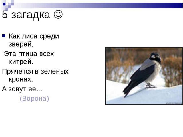5 загадка Как лиса среди зверей, Эта птица всех хитрей. Прячется в зеленых кронах. А зовут ее... (Ворона)