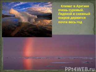 Климат в Арктике очень суровый. Ледяной и снежный покров держится почти весь год