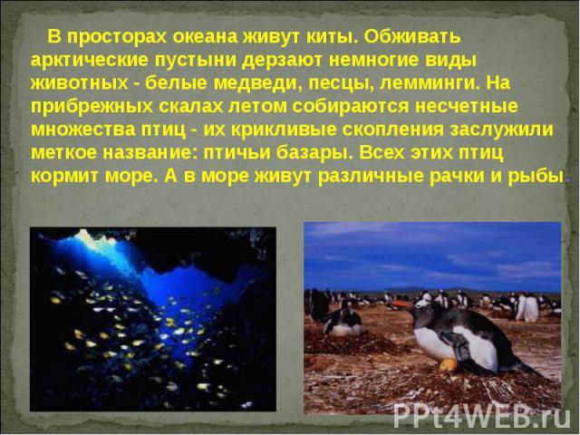 В просторах океана живут киты. Обживать арктические пустыни дерзают немногие виды животных - белые медведи, песцы, лемминги. На прибрежных скалах летом собираются несчетные множества птиц - их крикливые скопления заслужили меткое название: птичьи ба…