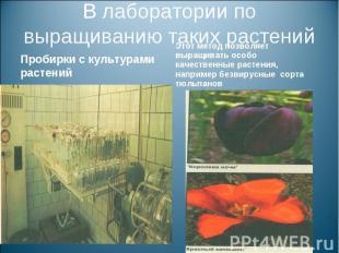 В лаборатории по выращиванию таких растенийПробирки с культурами растений Этот м