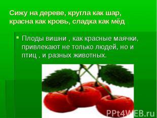 Сижу на дереве, кругла как шар, красна как кровь, сладка как мёдПлоды вишни , ка