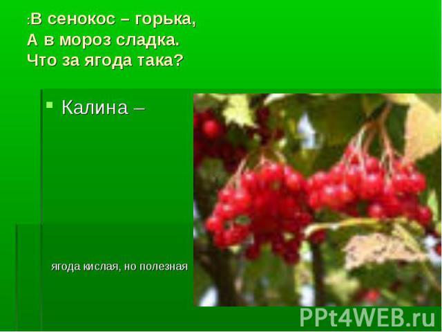 :В сенокос – горька, А в мороз сладка. Что за ягода така? Калина – ягода кислая, но полезная