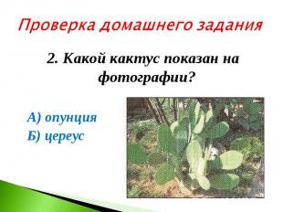 Проверка домашнего задания2. Какой кактус показан на фотографии? А) опунция Б) ц