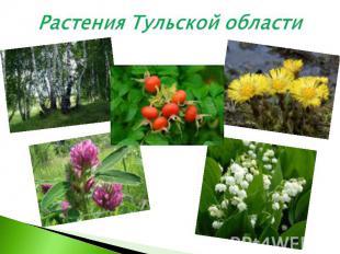 Растения Тульской области