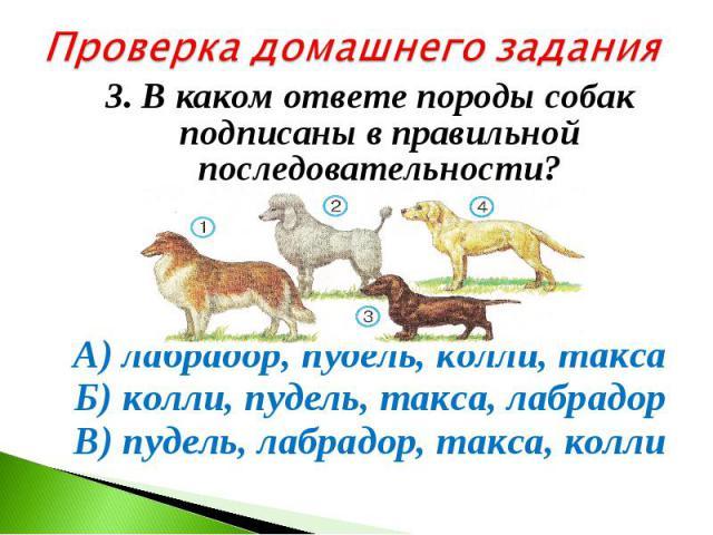 Проверка домашнего задания3. В каком ответе породы собак подписаны в правильной последовательности? А) лабрадор, пудель, колли, такса Б) колли, пудель, такса, лабрадор В) пудель, лабрадор, такса, колли