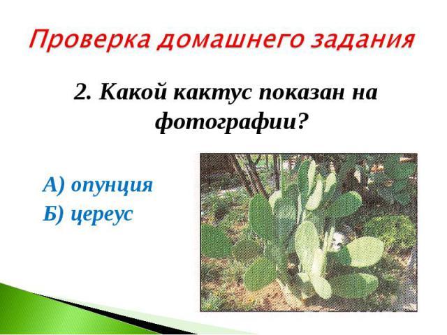 Проверка домашнего задания2. Какой кактус показан на фотографии? А) опунция Б) цереус