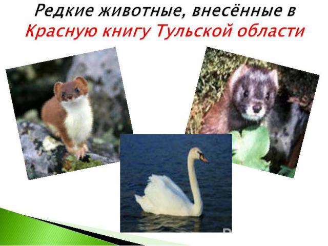 Редкие животные, внесённые в Красную книгу Тульской области