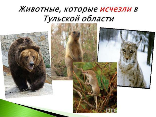 Животные, которые исчезли в Тульской области