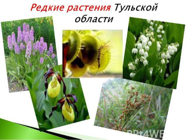 Редкие растения Тульской области