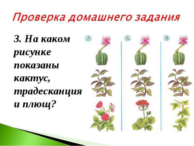 Проверка домашнего задания 3. На каком рисунке показаны кактус, традесканция и плющ?