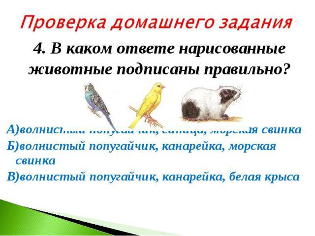 Проверка домашнего задания4. В каком ответе нарисованные животные подписаны правильно? А)волнистый попугайчик, синица, морская свинка Б)волнистый попугайчик, канарейка, морская свинка В)волнистый попугайчик, канарейка, белая крыса