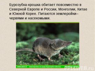 Бурозубка-крошка обитает повсеместно в Северной Европе и России, Монголии, Китае
