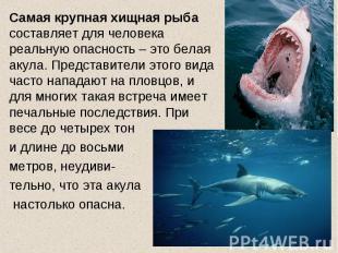 Самая крупная хищная рыба составляет для человека реальную опасность – это белая