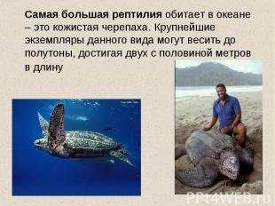 Самая большая рептилия обитает в океане – это кожистая черепаха. Крупнейшие экзе
