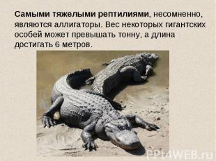 Самыми тяжелыми рептилиями, несомненно, являются аллигаторы. Вес некоторых гиган