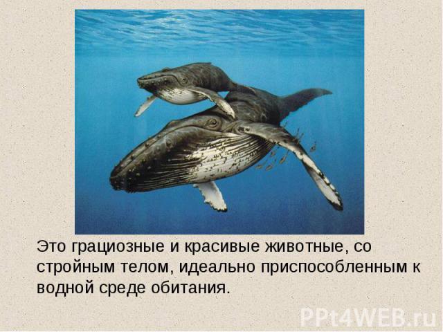 Это грациозные и красивые животные, со стройным телом, идеально приспособленным к водной среде обитания.