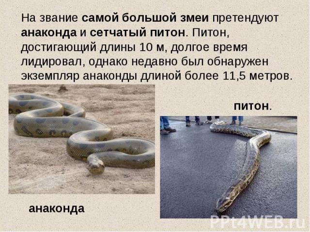 На звание самой большой змеи претендуют анаконда и сетчатый питон. Питон, достигающий длины 10 м, долгое время лидировал, однако недавно был обнаружен экземпляр анаконды длиной более 11,5 метров.