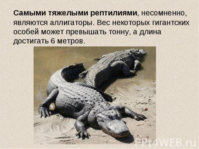 Самыми тяжелыми рептилиями, несомненно, являются аллигаторы. Вес некоторых гигантских особей может превышать тонну, а длина достигать 6 метров.